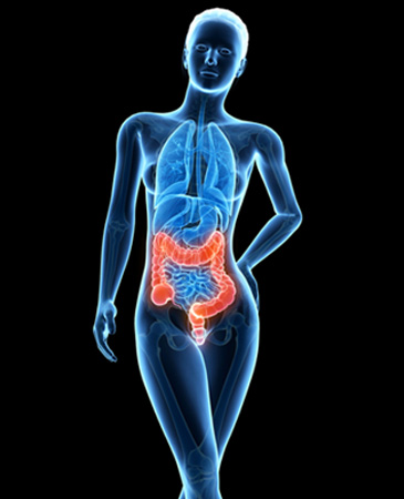 stock-photo-medical-d-illustration-female-anatomy-colon-177026141