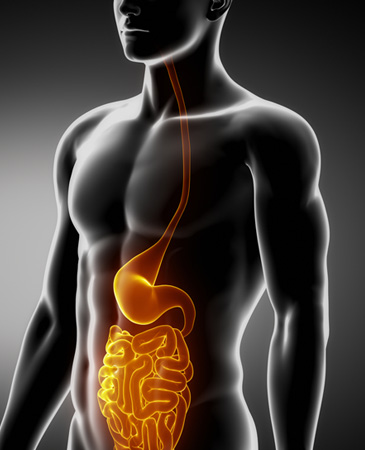 stock-photo-stomach-and-intestine-male-anatomy-anterior-x-ray-view-141479854